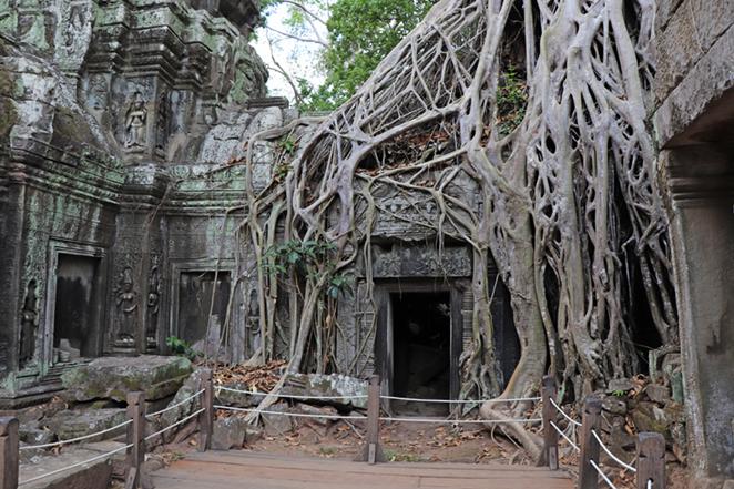 cambogia-templi-radici-giganti-2