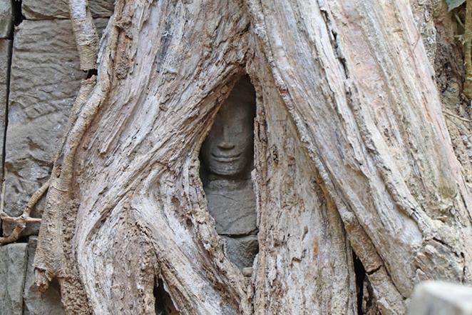 cambogia-volto-nel-tronco-di-albero